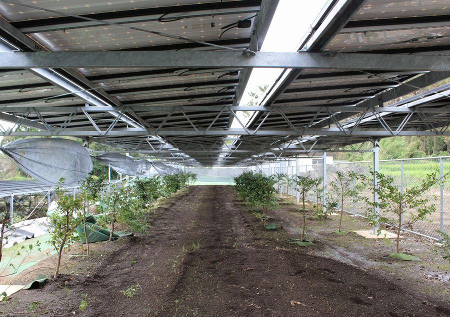ミョウガやサカキと太陽光を分け合う、熊本の営農型発電所 岡山・倉敷で太陽光発電のことなら 株式会社エコライフジャパン